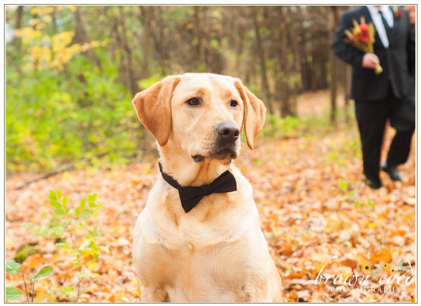 Wedding-Dog-bow-tie